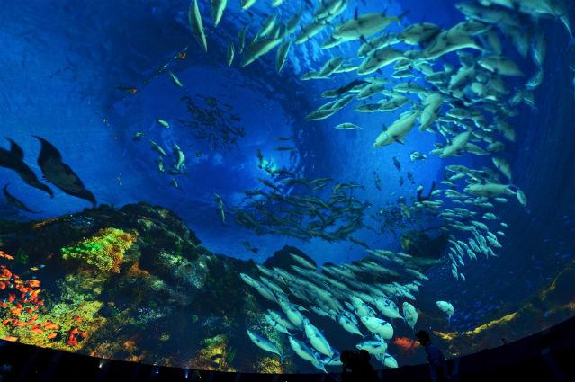 壁纸 海底 海底世界 海洋馆 水族馆 桌面 639_425
